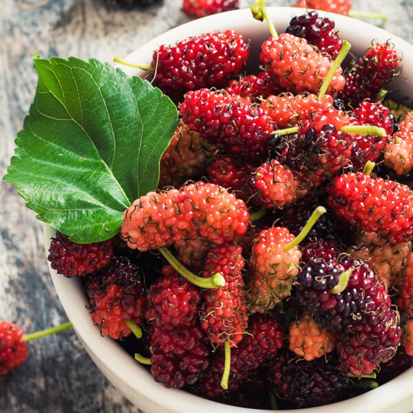 Food Photography - Mulberry